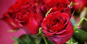 çiçekçilik